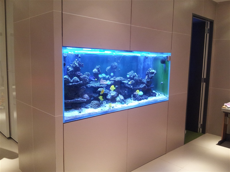 Aquarium Maintenance Long Island Marine Fish Fish Tank